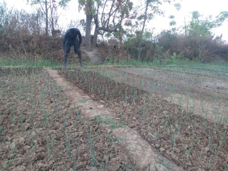 Vegetable farmers in Lambussie appeal for government's support
